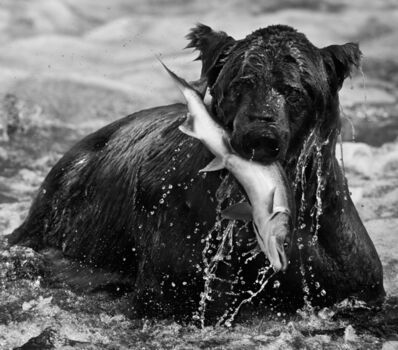 David Yarrow, 'Catch', 2012