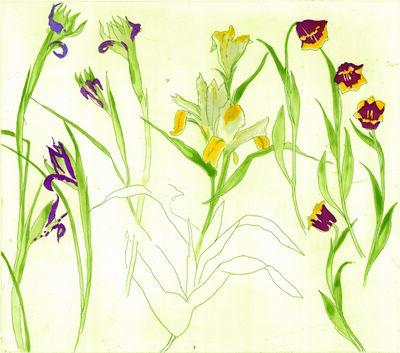 Elizabeth Blackadder, 'Irises, Lilies, Tulips', 2013