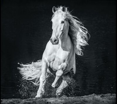David Yarrow, 'Horsepower', 2020