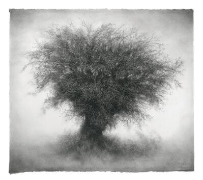 Sue Bryan, 'Urchin', 2017