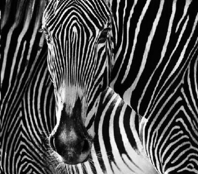 David Yarrow, 'The Puzzle ', 2013
