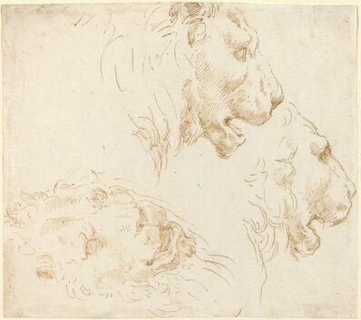 Stefano Della Bella, 'Studies of a Lion's Head'