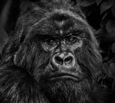 David Yarrow, 'Kong', 2019