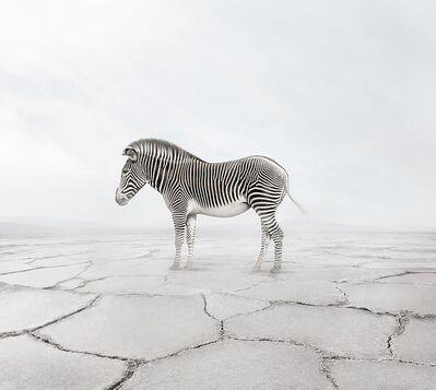 Alice Zilberberg, 'Zen Zebra ', 2019