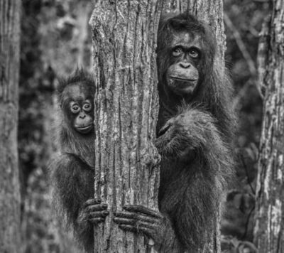 David Yarrow, 'Family Tree', 2018