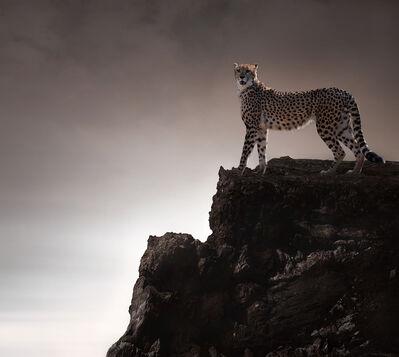 Eriko Kaniwa, 'Cheetah', 2019
