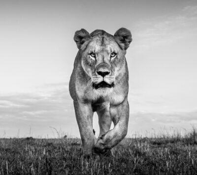 James Lewin, 'Instinct, Maasai Mara, Kenya.', 2020