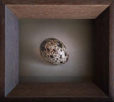 Kate Breakey, 'Quail Egg 38', 2019