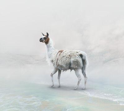 Eriko Kaniwa, 'Llama', 2019