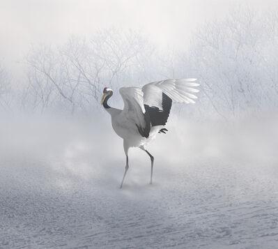 Eriko Kaniwa, 'Red Crown Crane', 2019