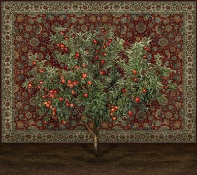 Tal Shochat, 'Apple Tree with Carpet', 2019