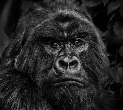 David Yarrow, 'Kong', 2019