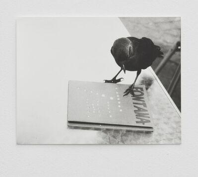 Jochen Lempert, 'Jackdaw (Fontana) II', 2014