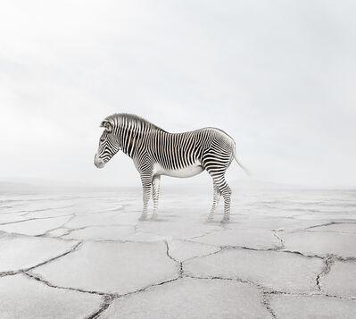 Alice Zilberberg, 'Zen Zebra', 2019