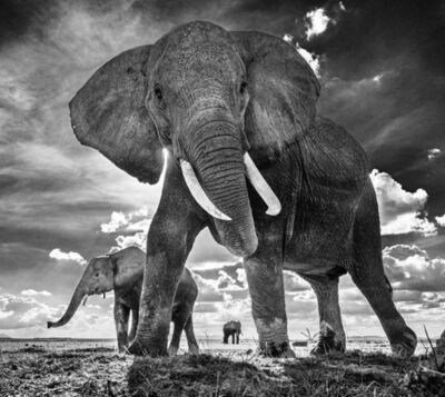 David Yarrow, 'The Untouchables II', 2017