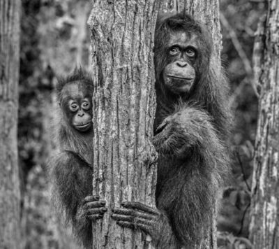 David Yarrow, 'Family Tree', 2019