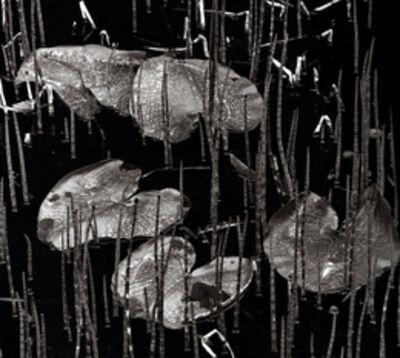 Brett Weston, 'Swamp, Alaska', 1977