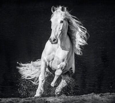 David Yarrow, 'Horsepower', 2020