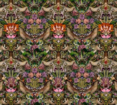 Lisa Frank, 'William Morris Specimen Collection', 2012