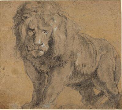 Peter Paul Rubens, 'Lion', ca. 1612-1613
