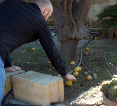 Ovidiu Anton, 'Exchanging Lemons in Lefkosia and Lefkoşa', 2015