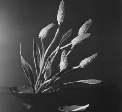 Horst P. Horst, 'Kniphofia (Red Hot Poker - Torch Lily), New York', 1957