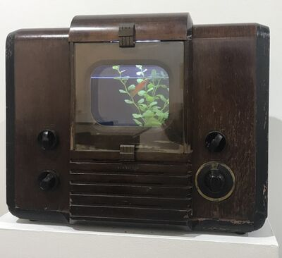 Nam June Paik, 'Sonatine for Gold Fish', 1996