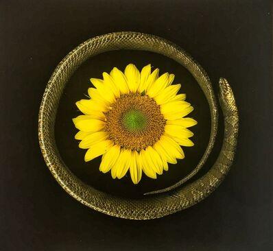 Portia Munson, 'Sunflower Snake', 2016