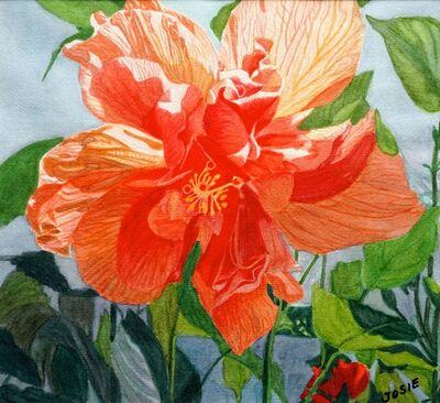 Josie Mengai, 'Orange Hibiscus', 2019