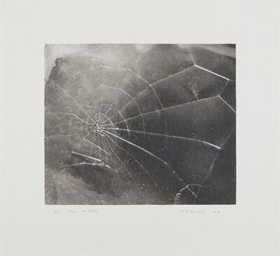 Vija Celmins, 'Spiderweb', 2009