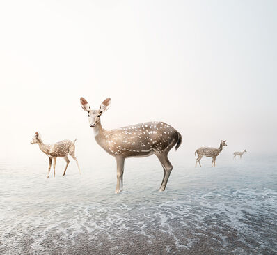 Alice Zilberberg, 'Stay Me Deer', 2019