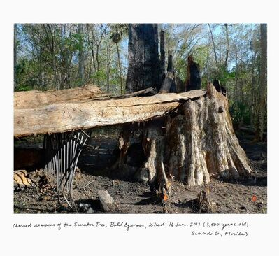 Rachel Sussman, 'Charred remains of the Senator Tree, Bald Cypress, killed January 16, 2012 (3,500 years old; Seminole co., Florida)'