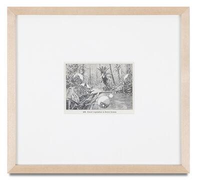 Bruce Conner, '(FOREST VEGETATION IN DUTCH GUIANA)', 1995