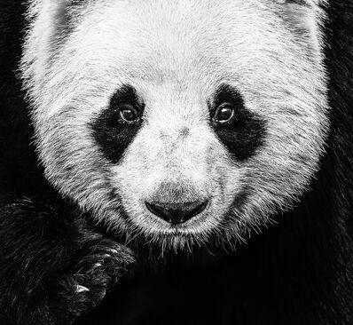 David Yarrow, 'Kung Fu Panda', 2016