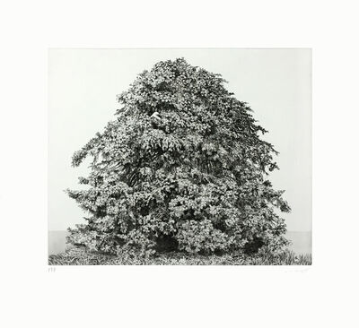 Ikeda Manabu, 'Blue Spruce', 2015