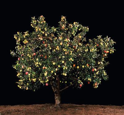 Tal Shochat, 'Apple ', 2011