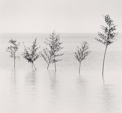 Michael Kenna, 'Seven Trees, Misumi, Kyushu, Japan', 2002