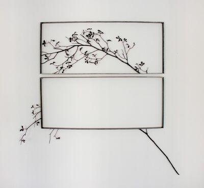 Cristina Almodóvar, 'Rosebush', 2011