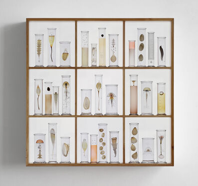 Steffen Dam, 'CABINET OF CURIOSITIES', 2019