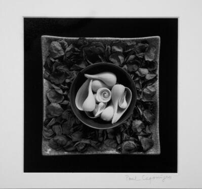 Paul Caponigro, 'Cornucopia Cushing, Maine', 1999