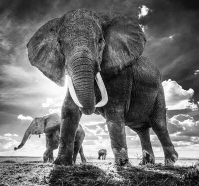 David Yarrow, 'The untouchables', 2017