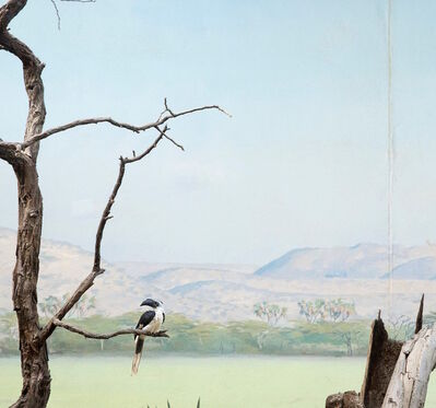 Eric Pillot, 'Hornbill and Dead Tree', 2015