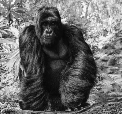 David Yarrow, 'The Kings Road', 2020
