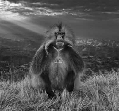 David Yarrow, 'Members Only', 2018
