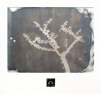 Neha Choksi, 'House plant and sun quotation 12', 2012