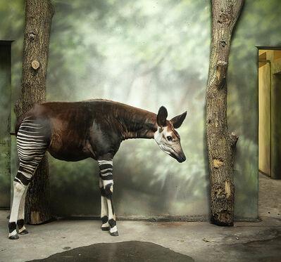Eric Pillot, 'Okapi and Forest', 2012