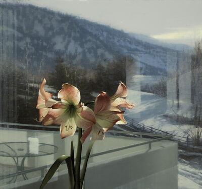 Daniel Sprick, 'Amaryllis in Winter', 2012
