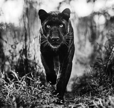David Yarrow, 'The Superhero', 2019