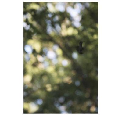 Purdy Eaton, 'Stand Still Like the Hummingbird', 2015