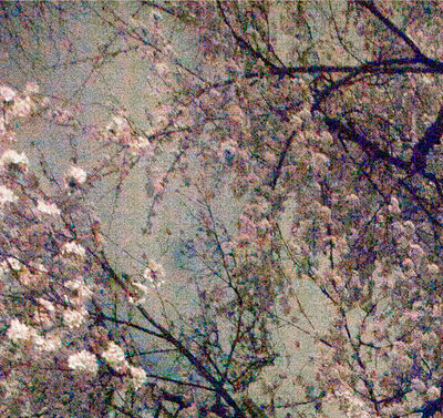 Ori Gersht, 'Tokyo Imperial Memories, Speck 01', 2010